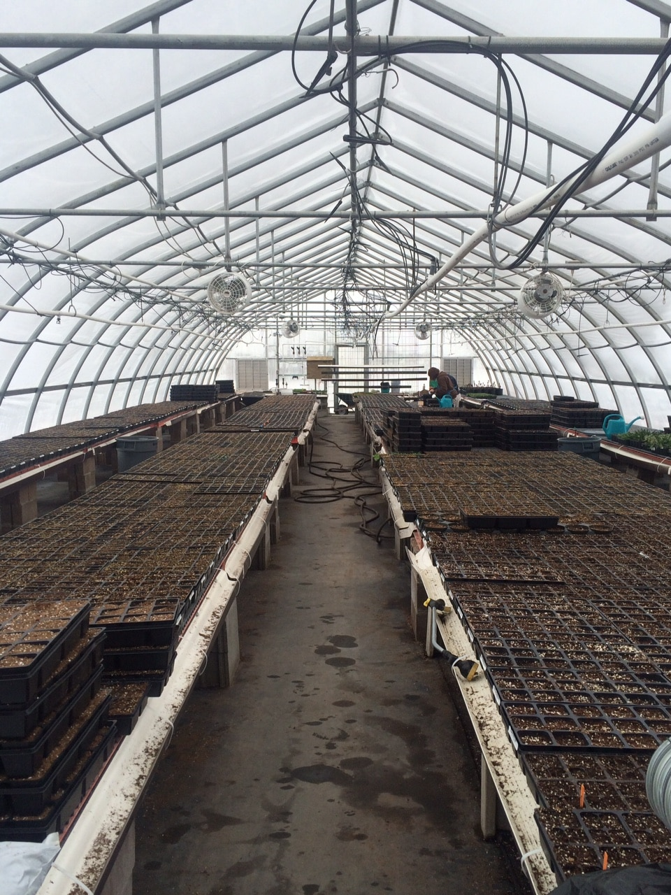 Annual-Seeding-in the nursery
