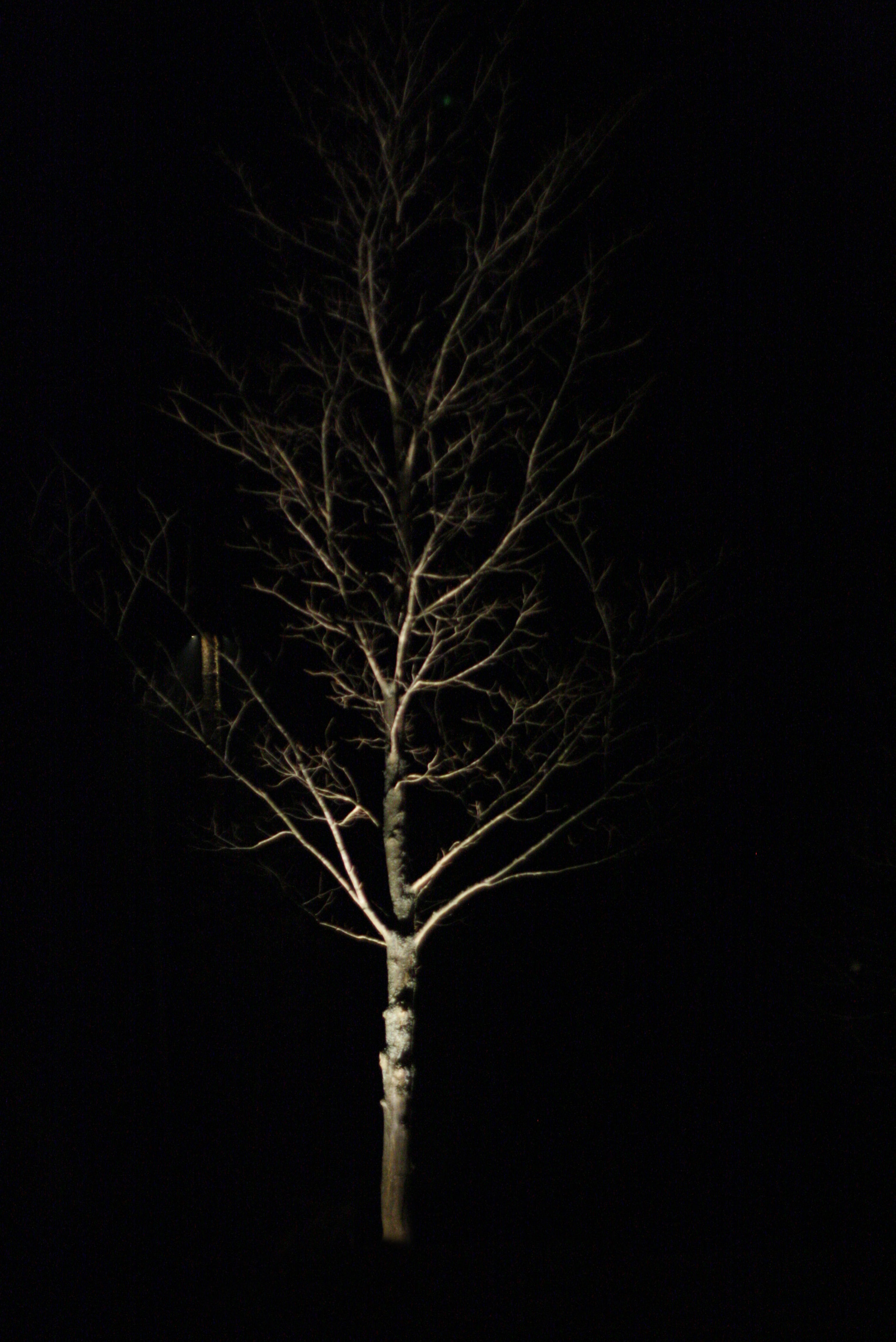 maple tree illuminated by landscape lighting