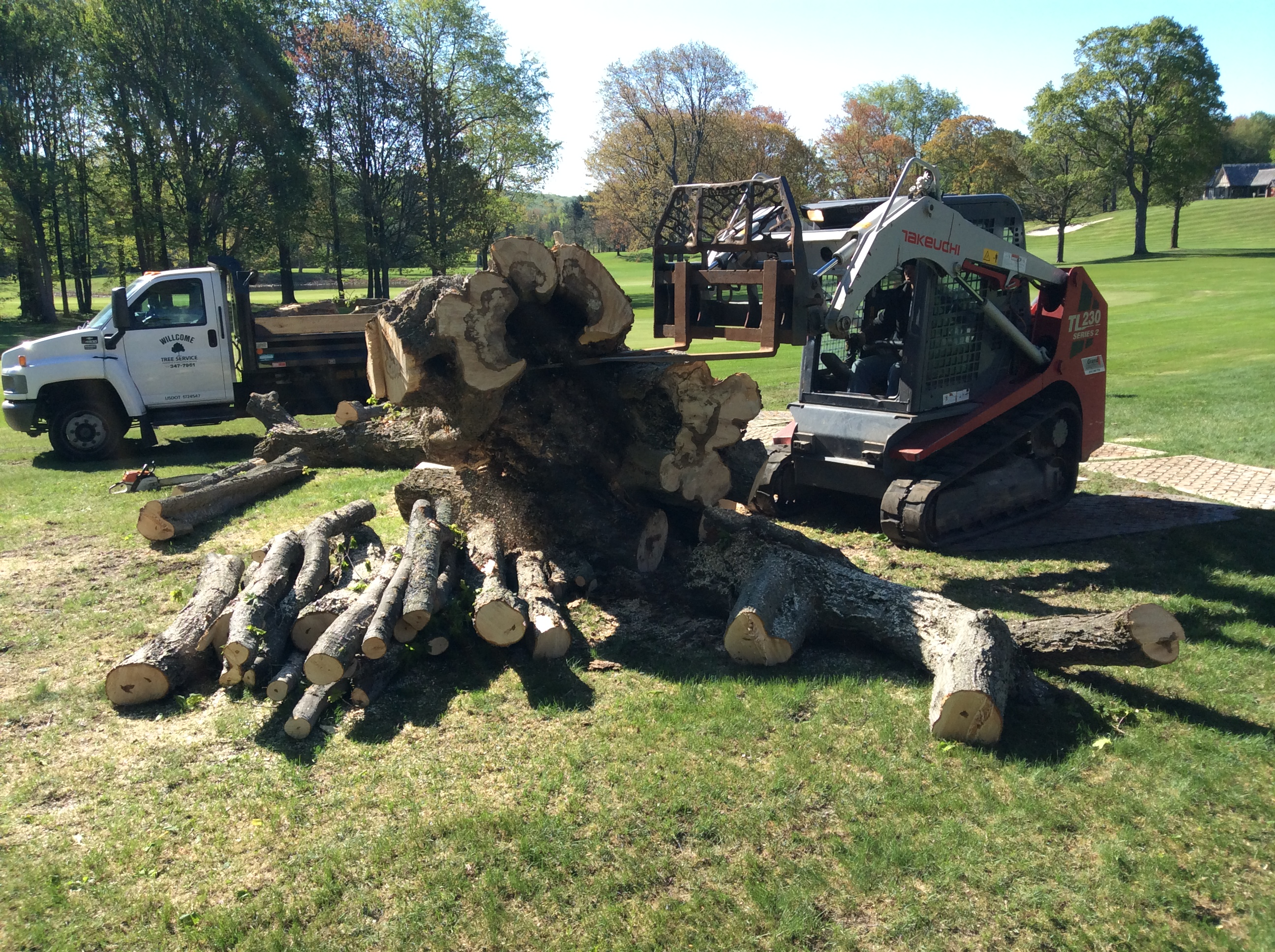 tree removal of large trees