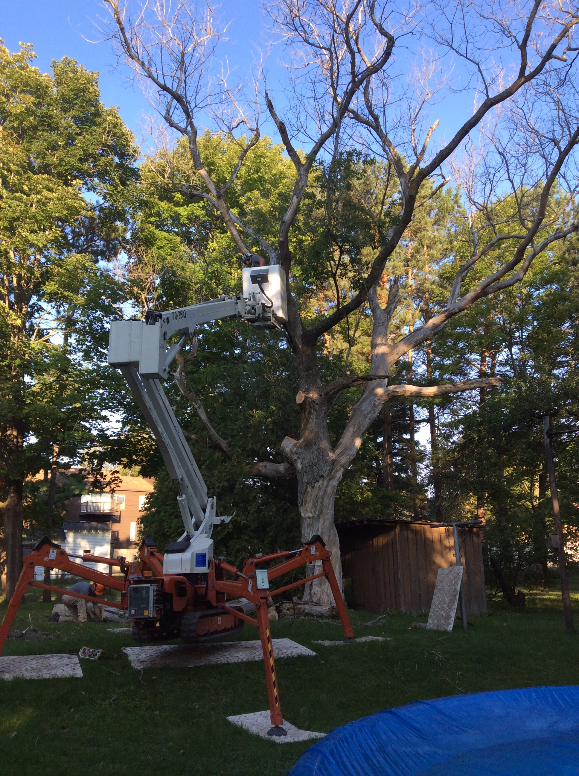 tree removal with the latest machinery