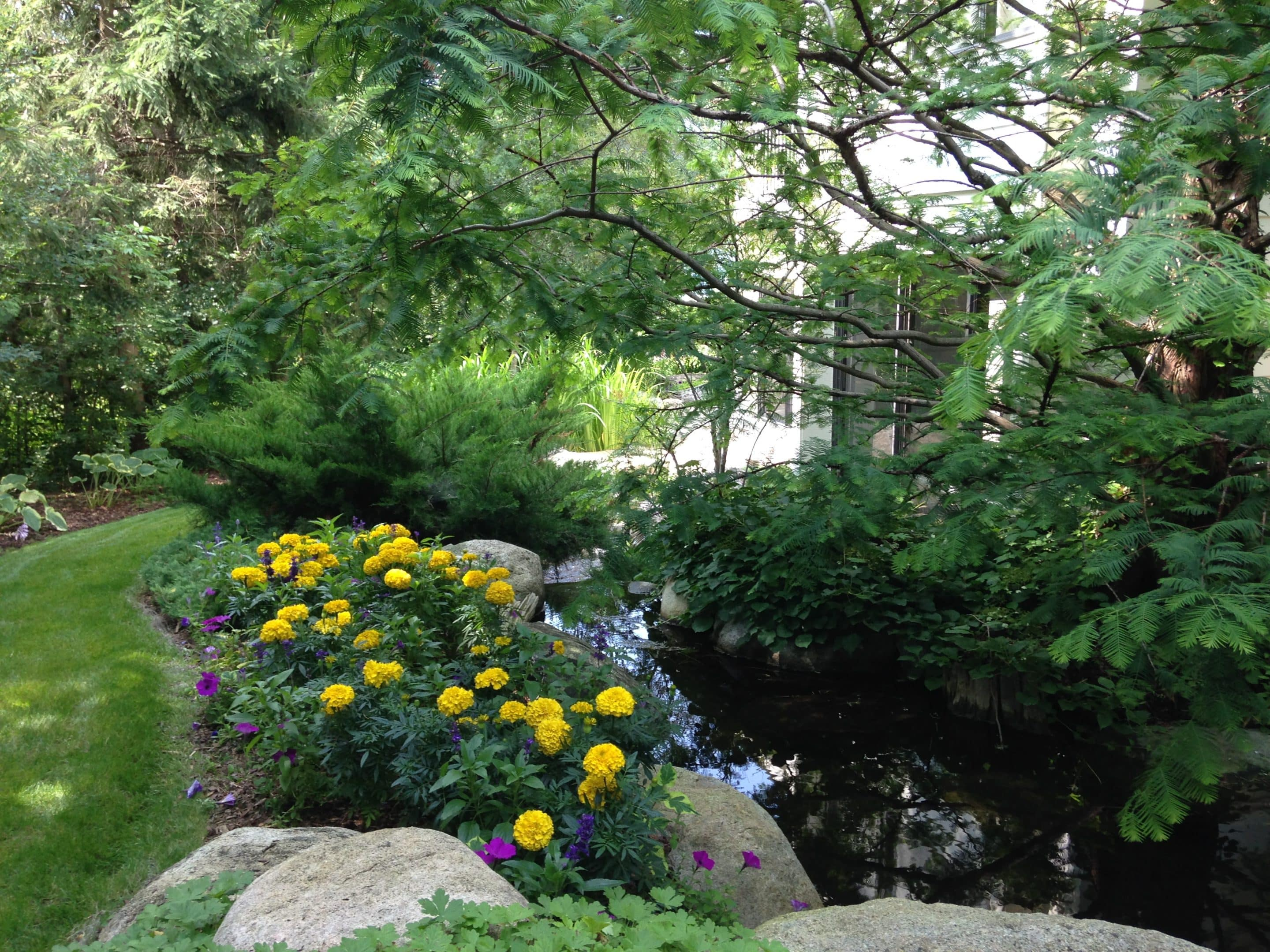 water features with a lush feel