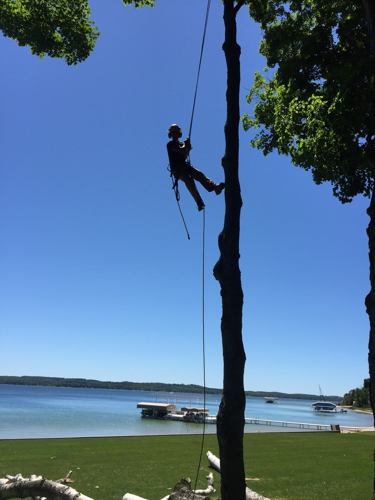tree service arborist hangs from a line