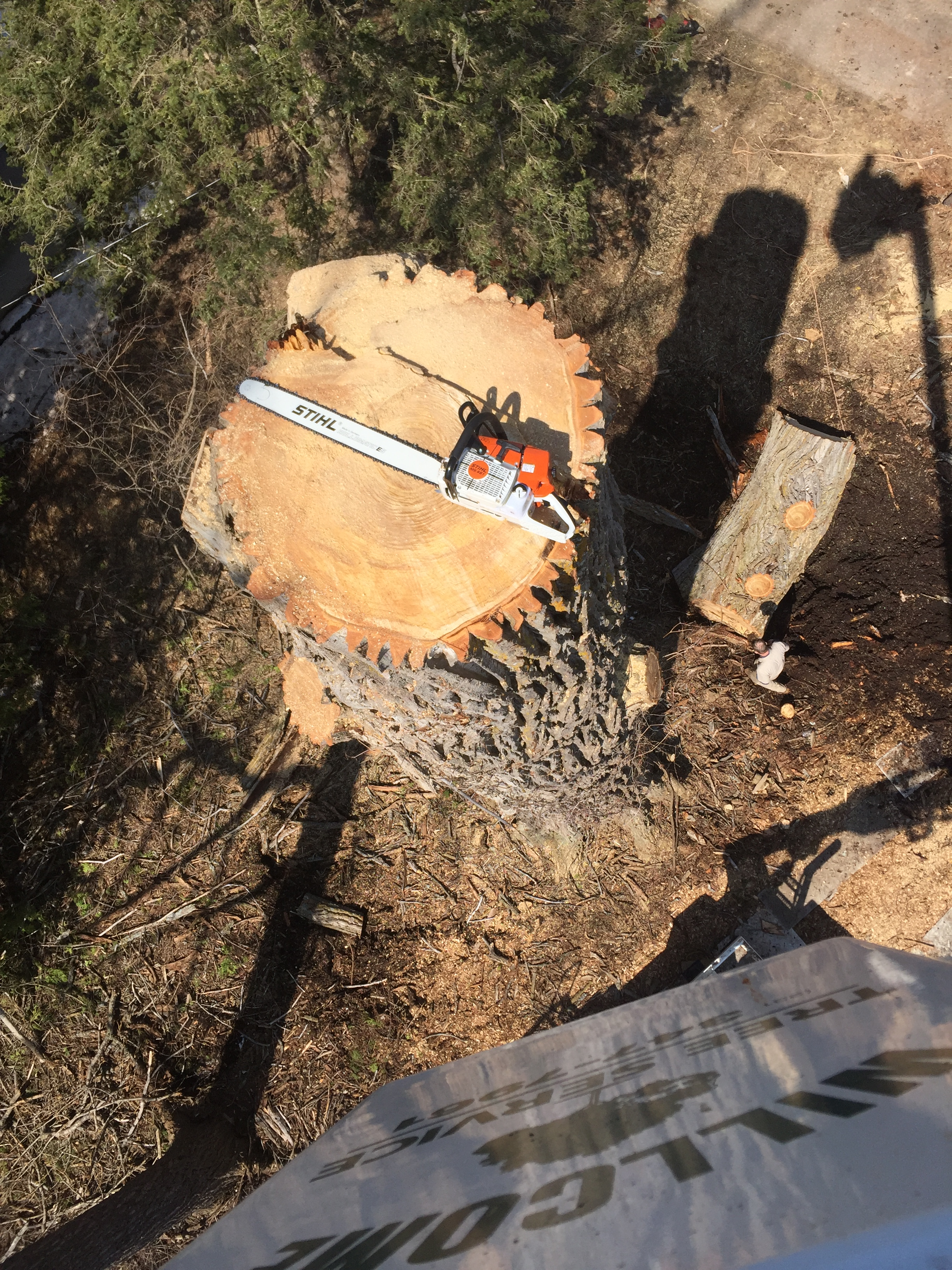 experienced tree service in process, viewed from above with chainsaw for scale