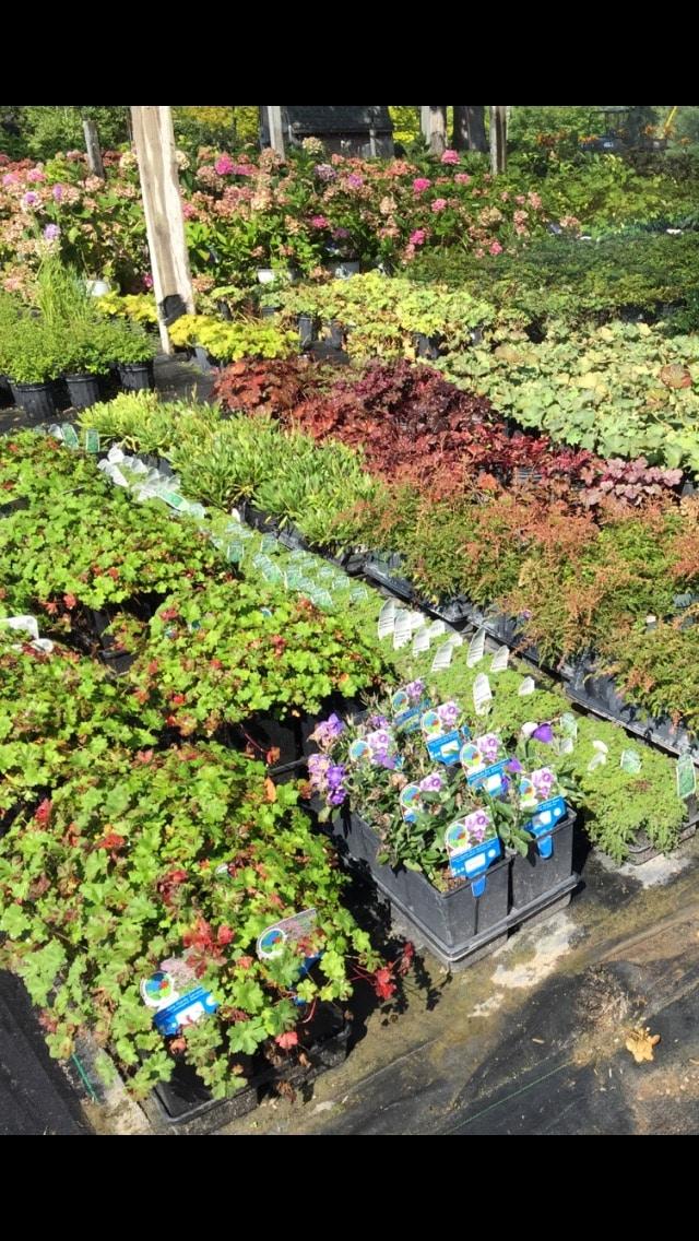 Mass-of-Perennials