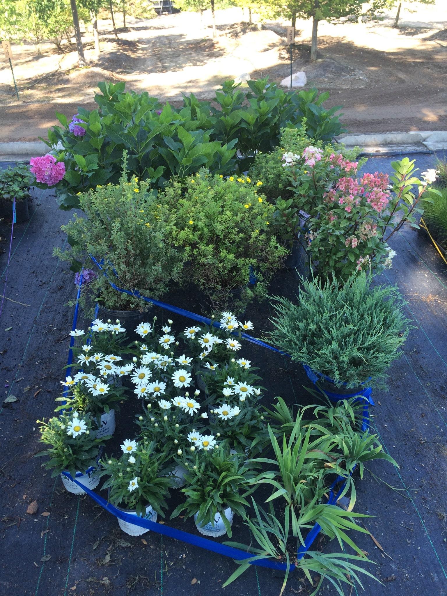 Plant-order