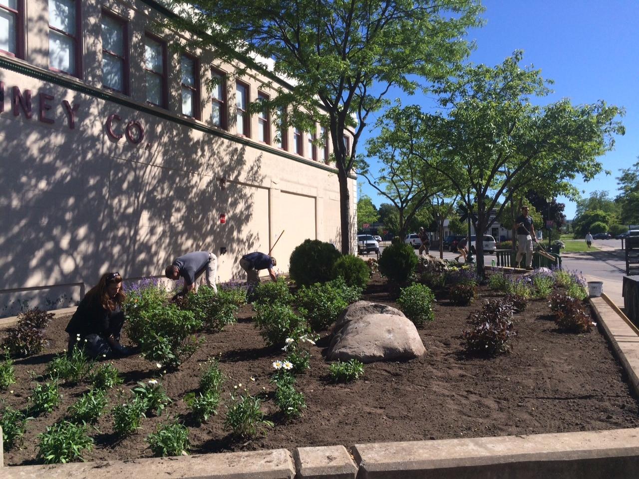 JC Penny Landscape installation