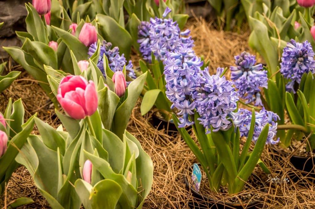 Home Builders Association floral display