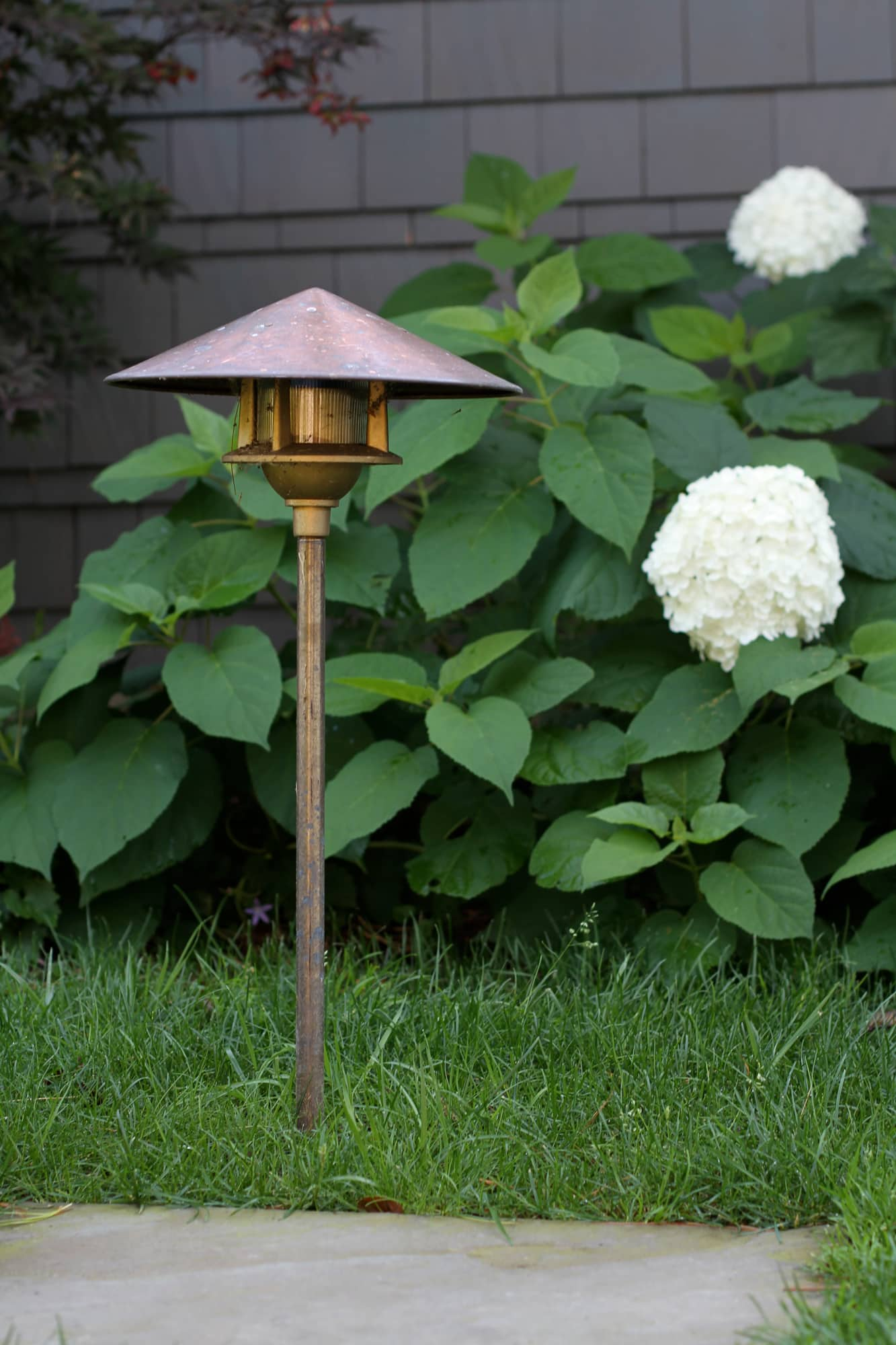 landscape lighting in front of a white hydrangea