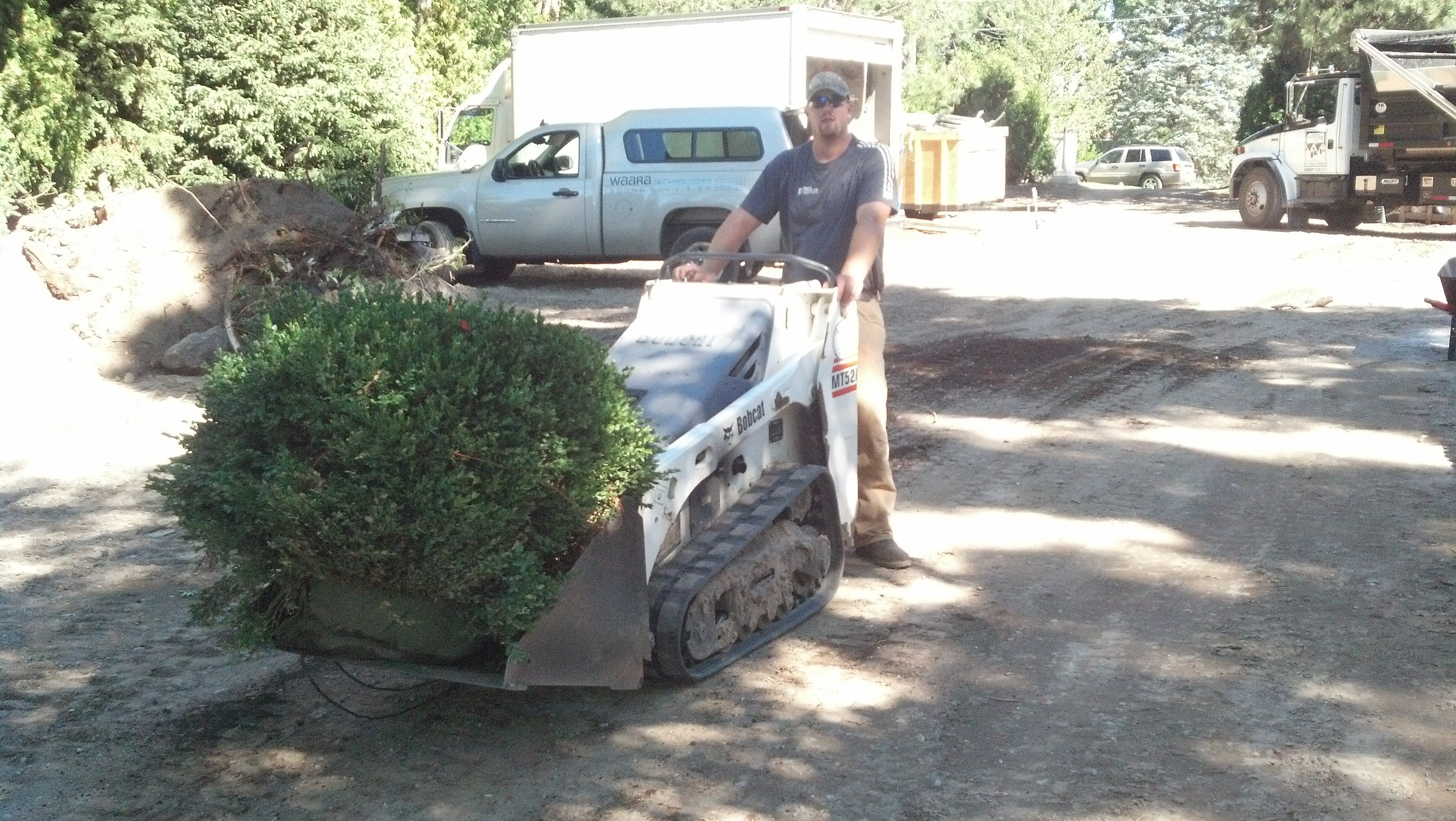 using a bobcat to move plants for a landscape design installation