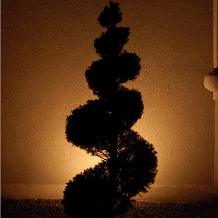 landscape lighting silhouetting